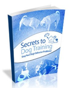 The Secrets to Dog Training